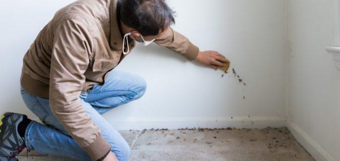 eliminare muffa dai muri definitivamente